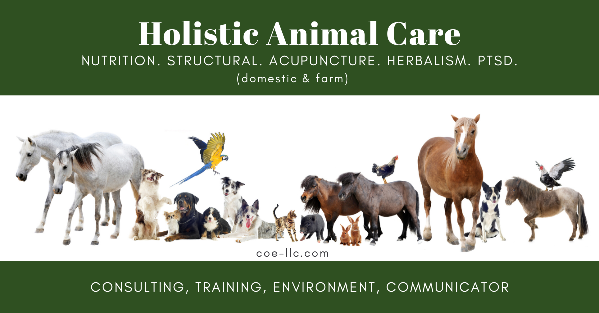 Holistic Animal Care coe-llc.com