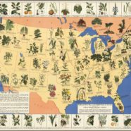 1930s Pharmacist Map of Herbal Cures